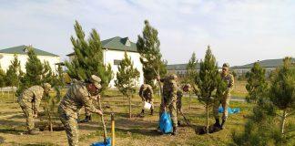 ağacəkmə aksiyası